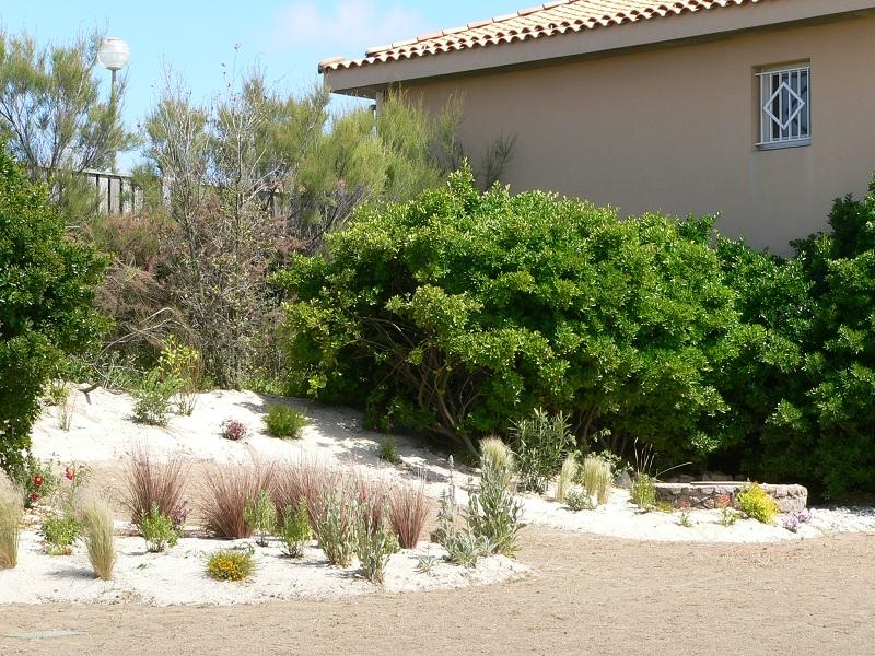 arbustes et maison