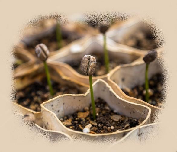 Jeunes pouces de la pépinière-végétale-85